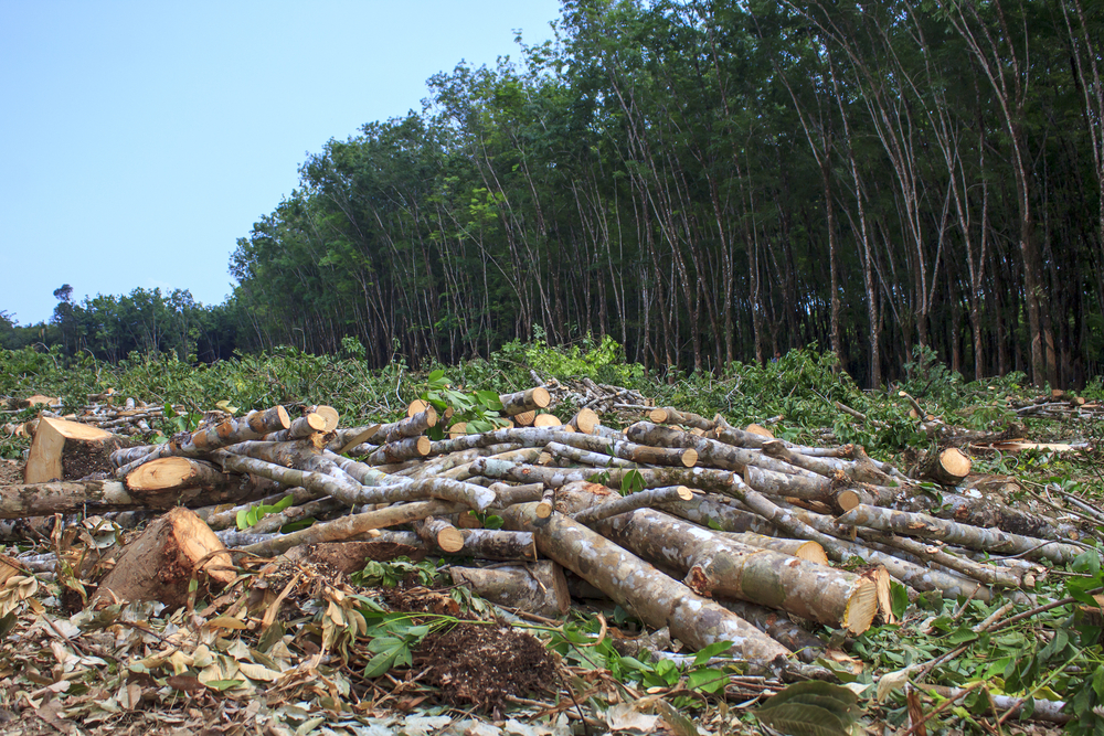 rainforest destruction and the effects it has on the environment essay Tropical rainforest destruction: reasons and consequences and nowhere is the wholesale destruction of the rainforest more evident than in the tropics.