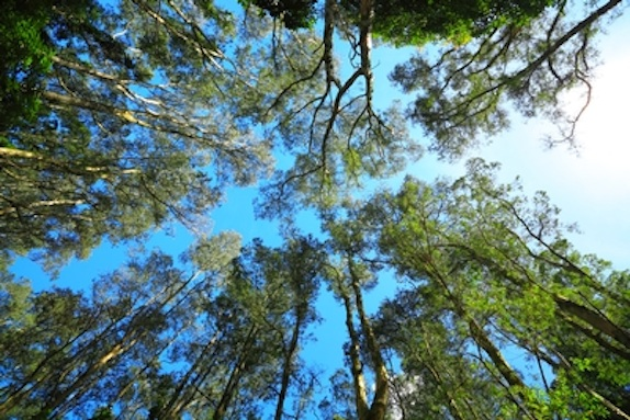 Sustainability environment aiche for Canopy of trees