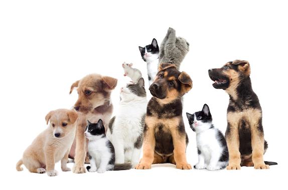 Healthy Paws Pet Insurance   AIChE