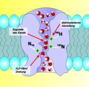 Aquaporin in Bi-layer Structures for Forward Osmosis and Other Water